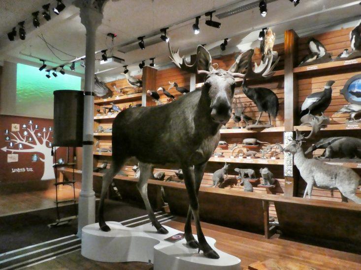 i Noè al Museo di Storia Naturale di Trondheim