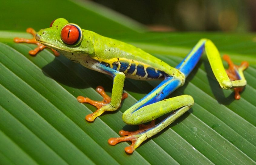 22 maggio: giornata mondiale della biodiversità