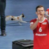 Gatti in Egitto: una gatta fa passerella ai Mondiali di pallamano