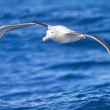 Pallamano: il volo dell'Albatro Siracusa