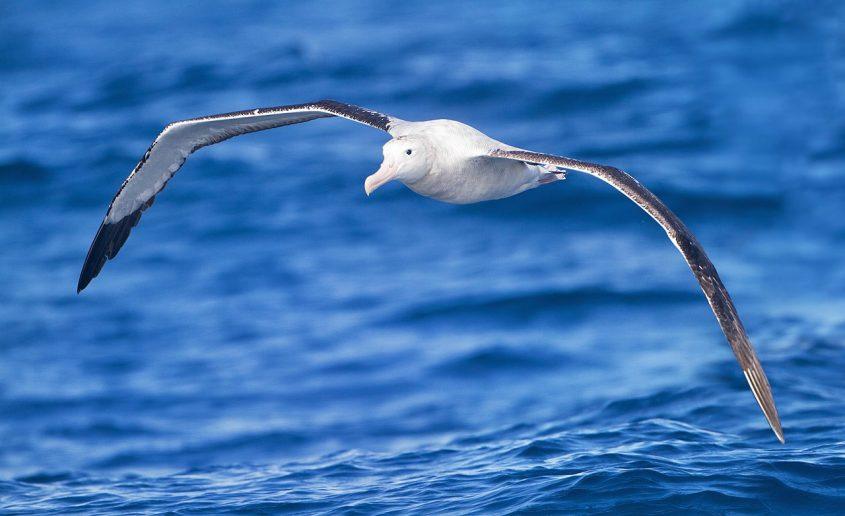 Pallamano: il volo dell'Albatro